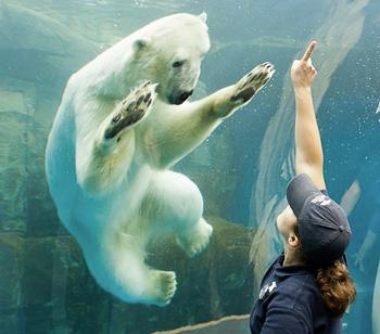 zoo design engineer - polar bear