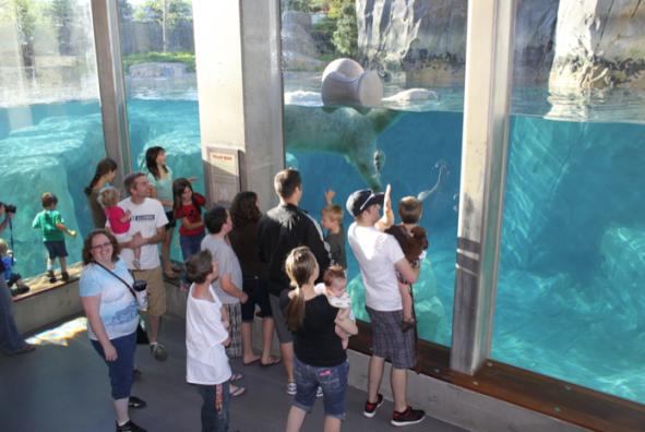 zoo exhibit design engineer